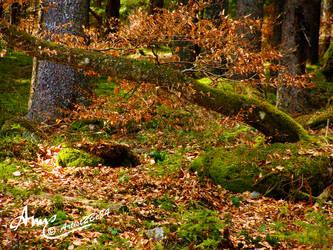 Schluchsee Baumformation Wald by Artist2Be84