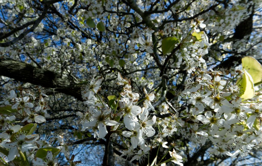 Poplar by Amarantheans