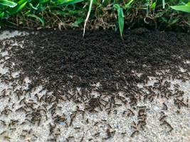 Ant Mosh Pit? by Amarantheans