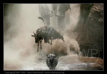 Mara crossing by invisiblewl