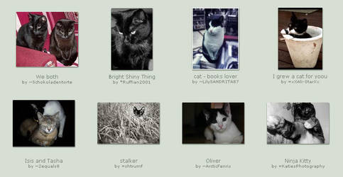 November 25 Submissions by KittyCatCult