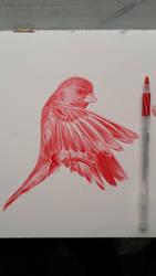 Biro Bird Sketch by ChrisHerreraArt