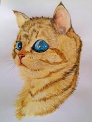 Gato by OlhosVerdes