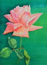 Rosa! by OlhosVerdes