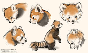 Red Panda by LCibos