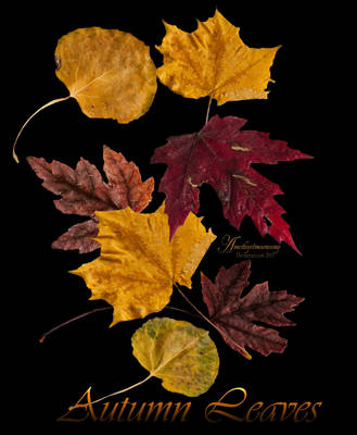 Fall Leaves Exclusive Stock Pack by amethystmoonsong