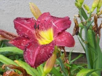 Rain Kissed Garden by amethystmoonsong