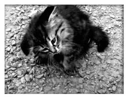 kitten by utopic-man