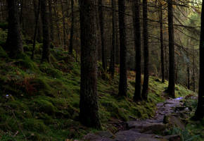 Forest Path by Mr-Wanonymous
