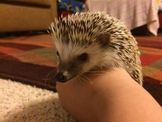 Hedgehog looking down by StarlightFS