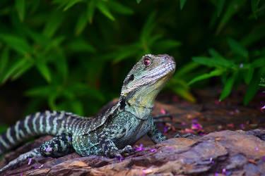 Lizard by Freya7