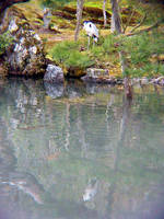 Reflection at Tenryuuji by TanteiKid