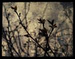 Last Days Of Winter by IrondoomDesign