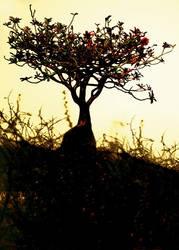 Tree Of Desolation by IrondoomDesign