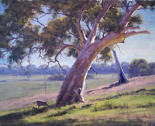 Arthurs creek Gums - Vic by artsaus