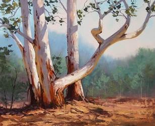 Mountain Ash Gums by artsaus