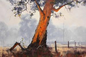 Australian Gum Tree by artsaus