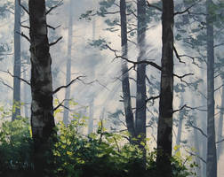 Light Through The trees by artsaus