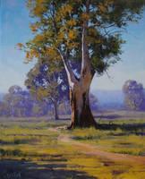 Majestic Gum Australia by artsaus