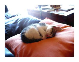 Sleepyhead by paczek