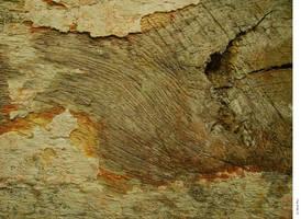 texture-3148 by markpiet