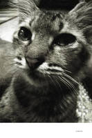 CAT - 1482 by markpiet