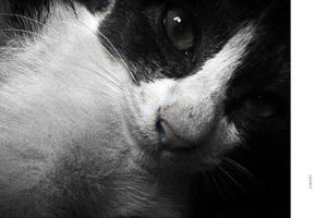 CAT - 1552 by markpiet
