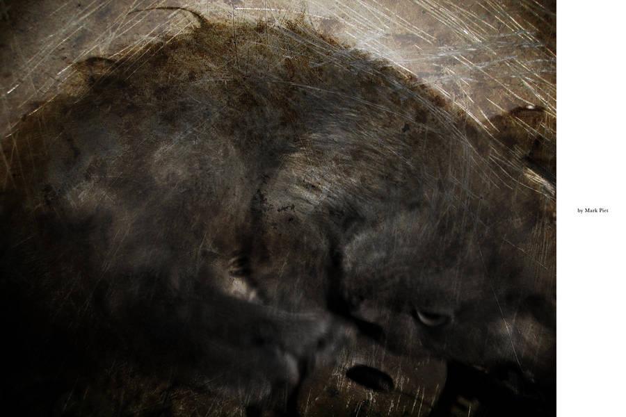 CAT HORROR : I IS DED by markpiet