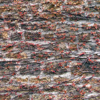 Stone wall, plants by PoProstuBono