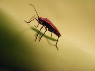 Box Elder Bug by Linuxfox00