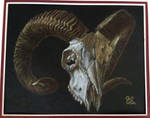 Ram Skull by Kittenpants