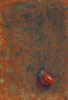 Ladybug on Rust by Kittenpants