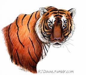 Bengal Tiger by RJDaae