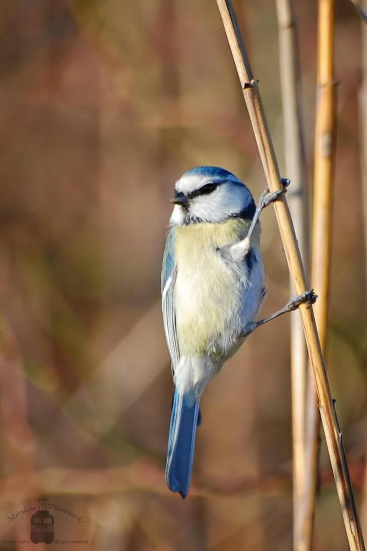 Birdie by MorpheusPhotoworks