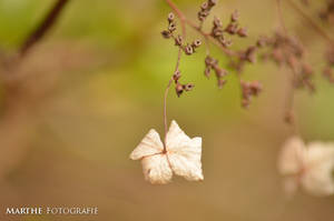 Flower by AgnethaArt