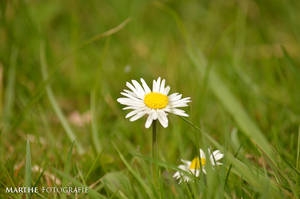 Little Flower by AgnethaArt