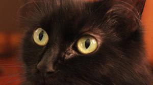 Cat eye's by AgnethaArt