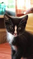 Little black cat by AgnethaArt
