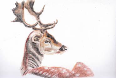 Deer by Moondancer3