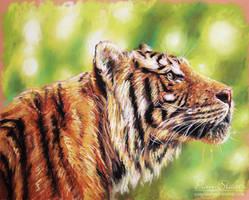 Tiger sketch by pamslaats