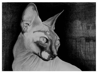 Sphinx Cat #Hyperrealism by StefanMarcuArt