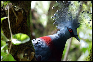 Blue crested bird by harlanm