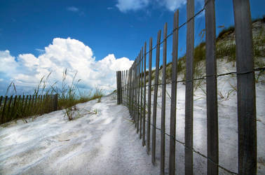 Dune fence by harlanm