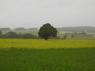 Green Tree by Cyrusma