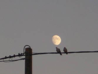 Birds on the Moon by Cyrusma