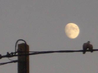 romance's Birds on the Moon by Cyrusma
