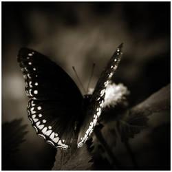 Butterfly II by GreenEyedHarpy