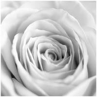 White II by GreenEyedHarpy