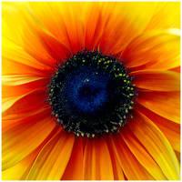 Colour Of Life XXIV by GreenEyedHarpy