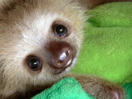Sloth Baby by Whyamithewerewolf